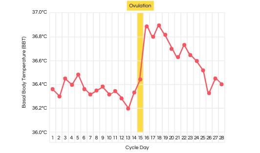 Basal Body Temperature Chart (BBT Chart)